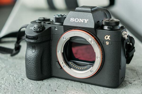 دوربین عکاسی سونی A9 ایده آل برای عکاسی حیات وحش