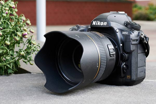 دوربین های نیکون و کانن فول فریممناسب برای عکاسی حیات وحش