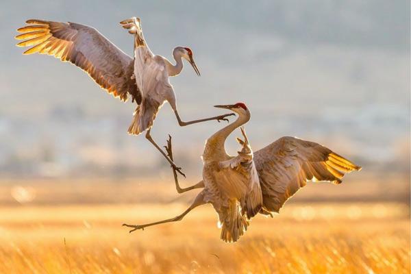 دیگر نکات مهم در عکاسی از پرندگان