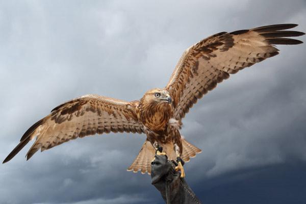 راهنمای کامل عکاسی از پرندگان