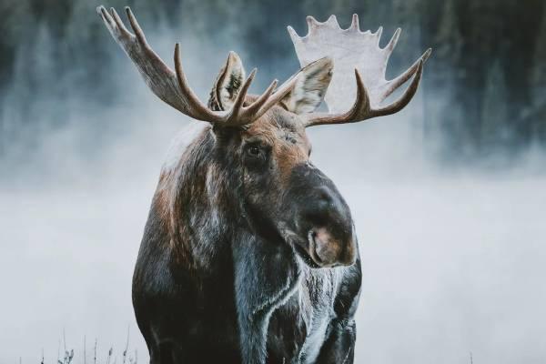 عکاسی حیات وحش در زمستان