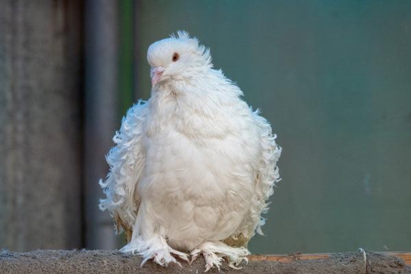 نزدیک شدن به سوژه در عکاسی از پرنده ها
