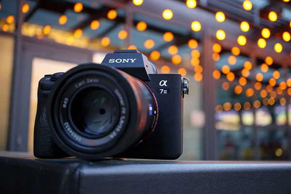 Alpha A7 III  برای عکاسی حیات وحش