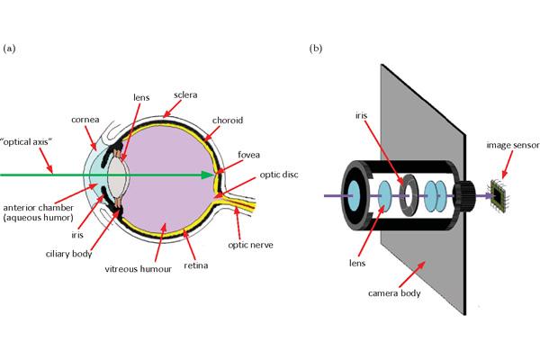 عملکرد چشم انسان نسبت به دوربین
