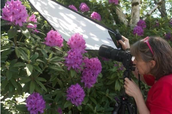 استفاده از رفلکتور برای عکاسی از گل