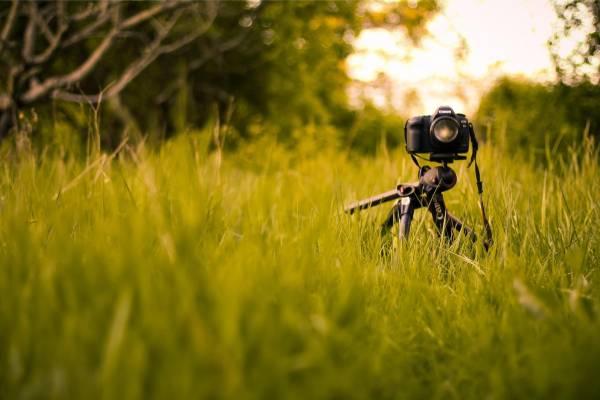 تجهیزات مورد نیاز برای عکاسی از گیاهان