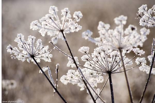 زمان مناسب برای تصویربرداری از گیاهان