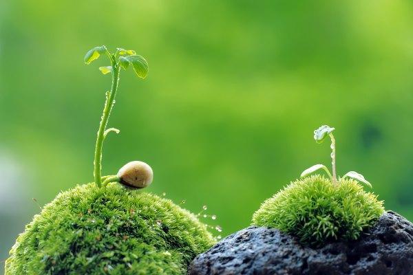 عکاسی از گیاهان