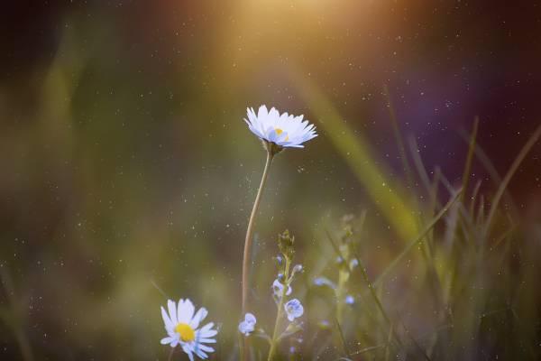 لنز مناسب عکاسی از گل و گیاه