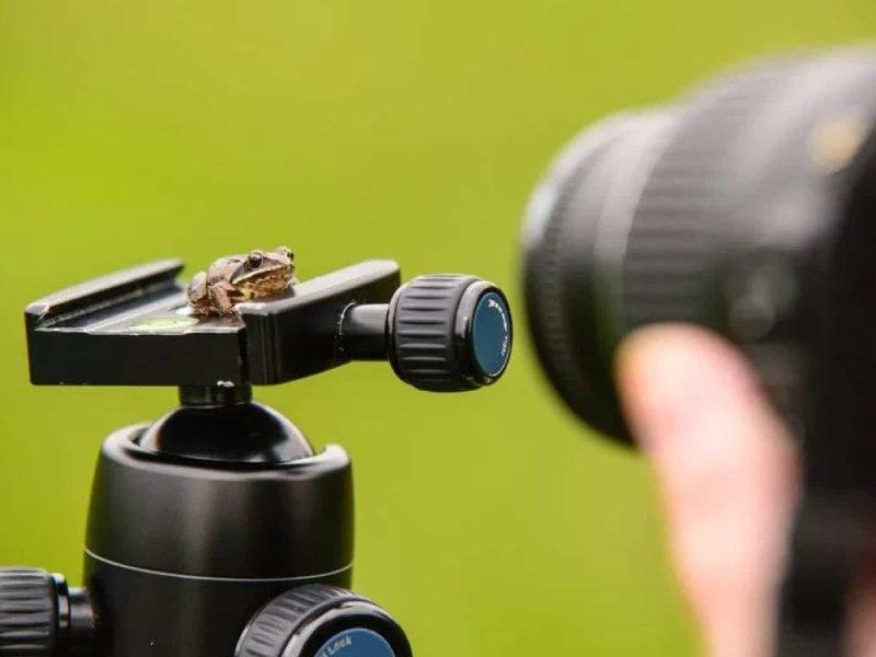 عکاسی ماکرو چیست؟