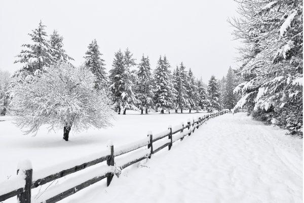 تنظیمات دوربین برای عکاسی در برف